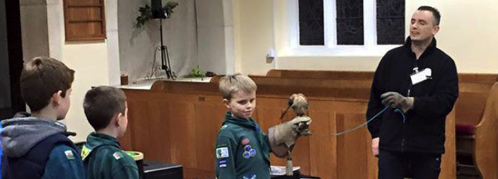 Falconry UK Brownie, Cub & Scout Visits
